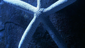 Starfish Wallpaper For Iphone