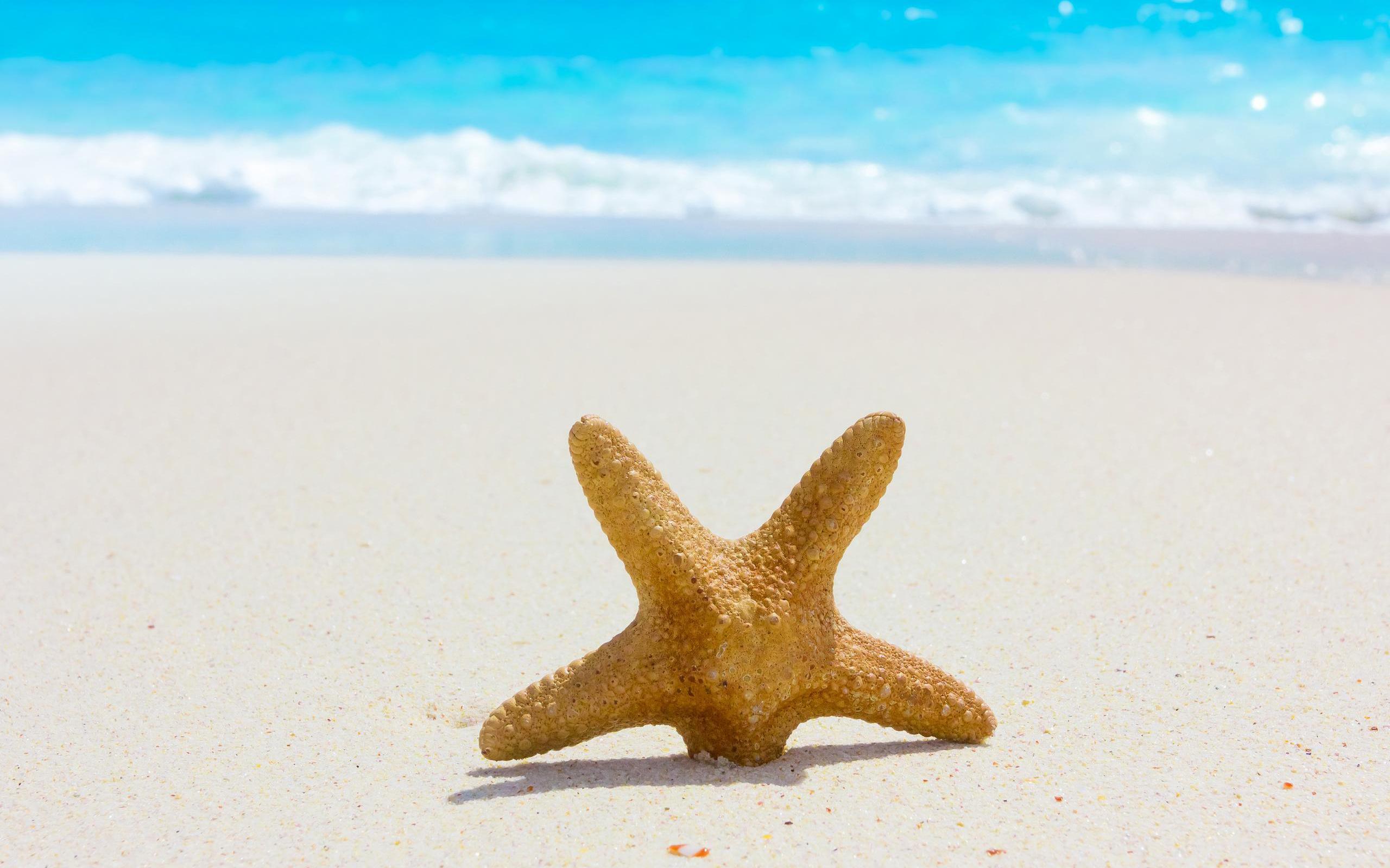 Starfish Wallpapers HD