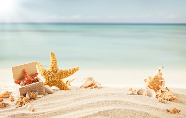 Starfish Wallpapers HQ