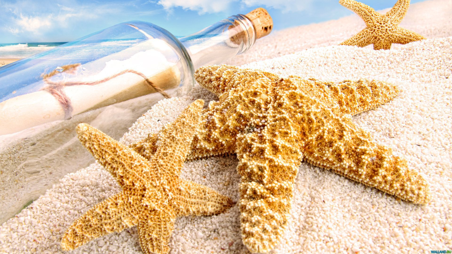 Starfish Wallpapers And Backgrounds