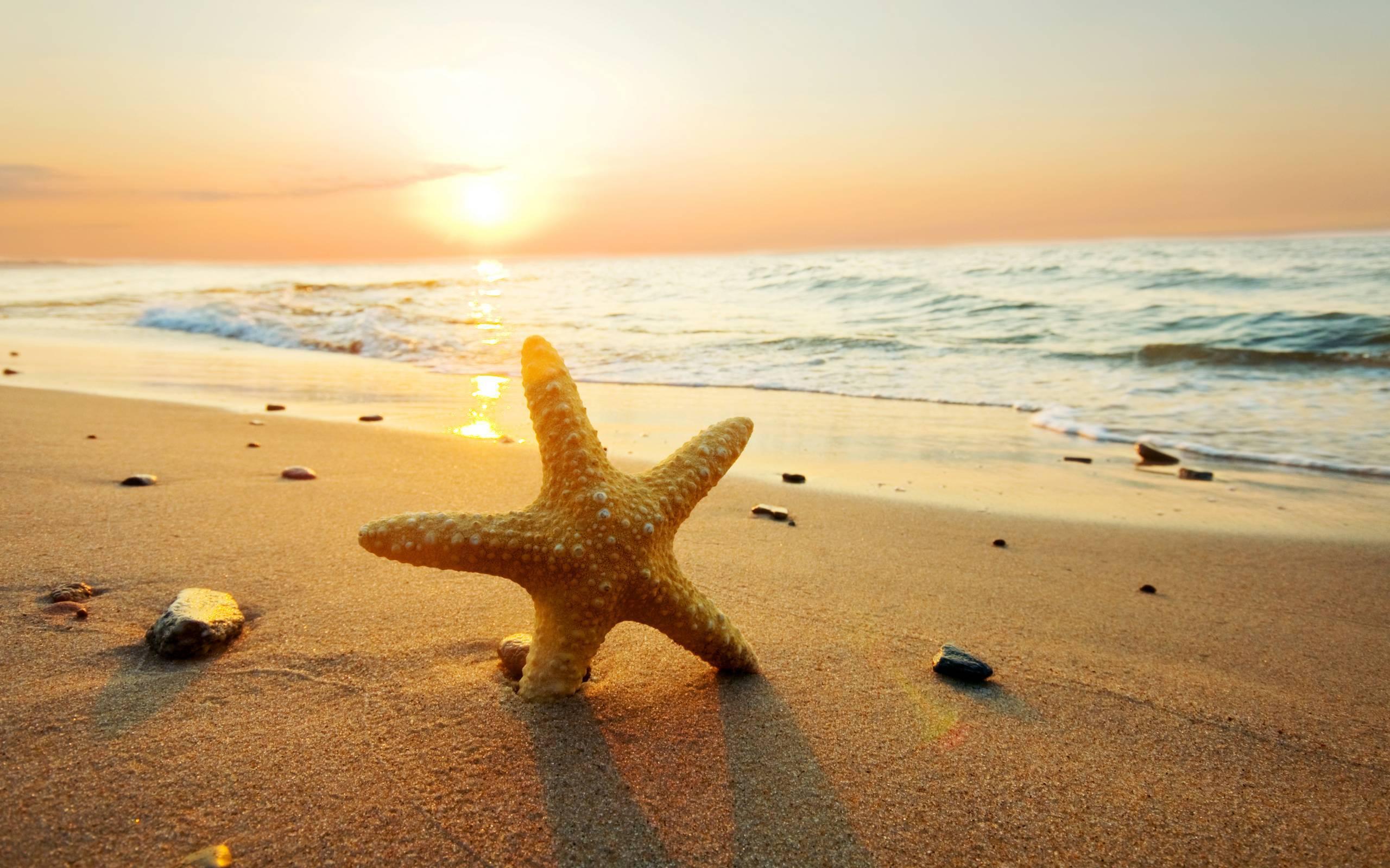 Starfish Widescreen
