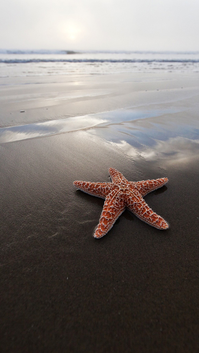 Starfish Iphone Background