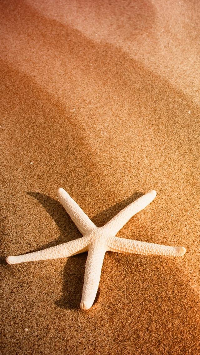 Starfish Iphone HD Wallpaper
