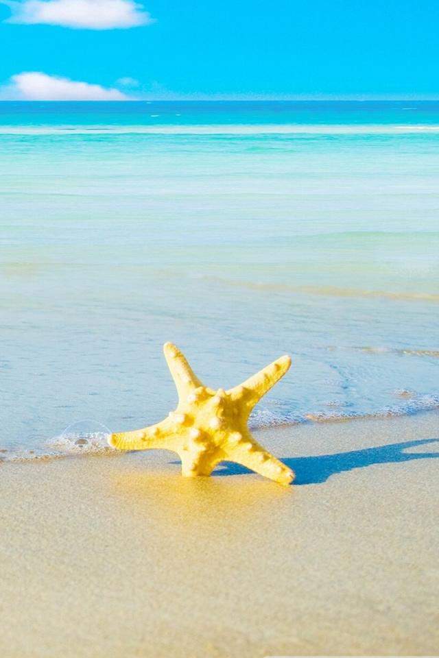 Starfish Iphone Images