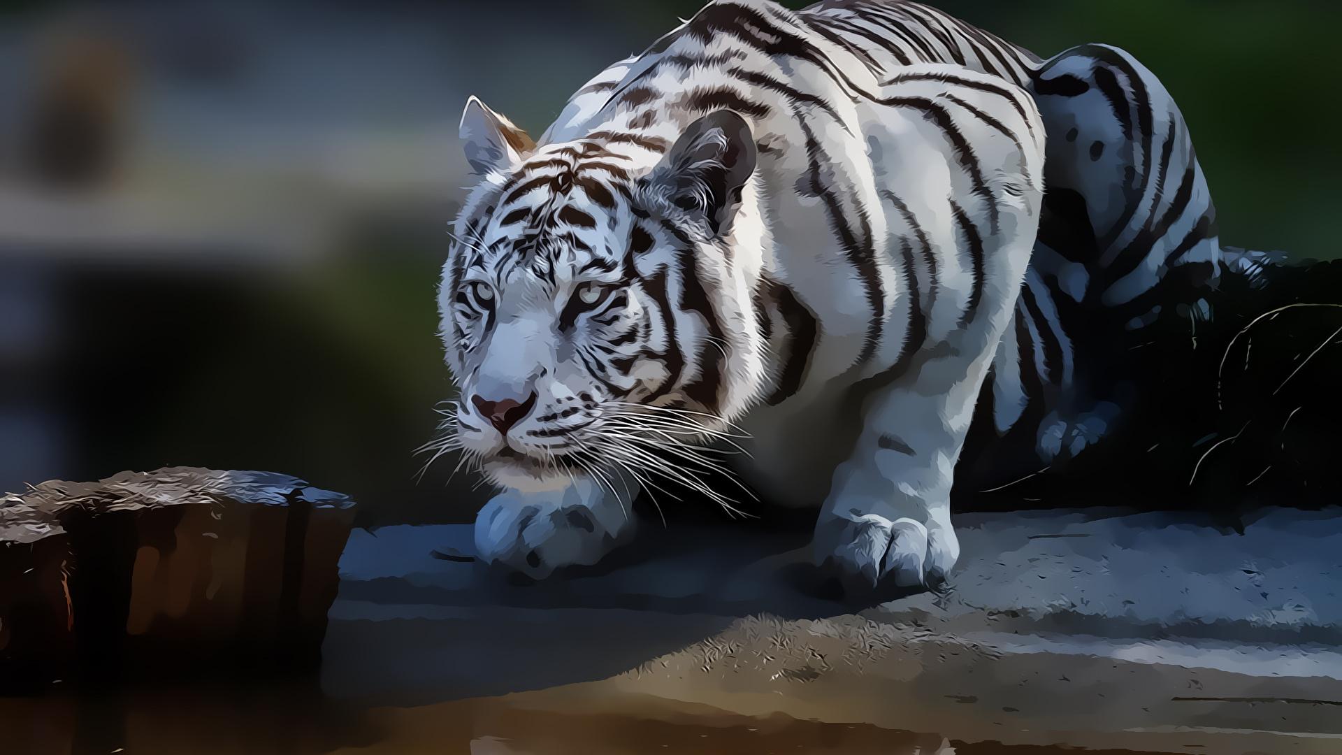 White Tiger Desktop