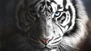 White Tiger HD Iphone