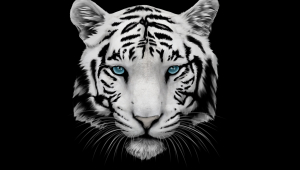 White Tiger Wallpaper For Laptop