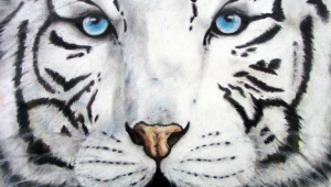 White Tiger Iphone HD Wallpaper