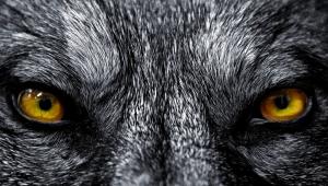 Wolf Screenshots