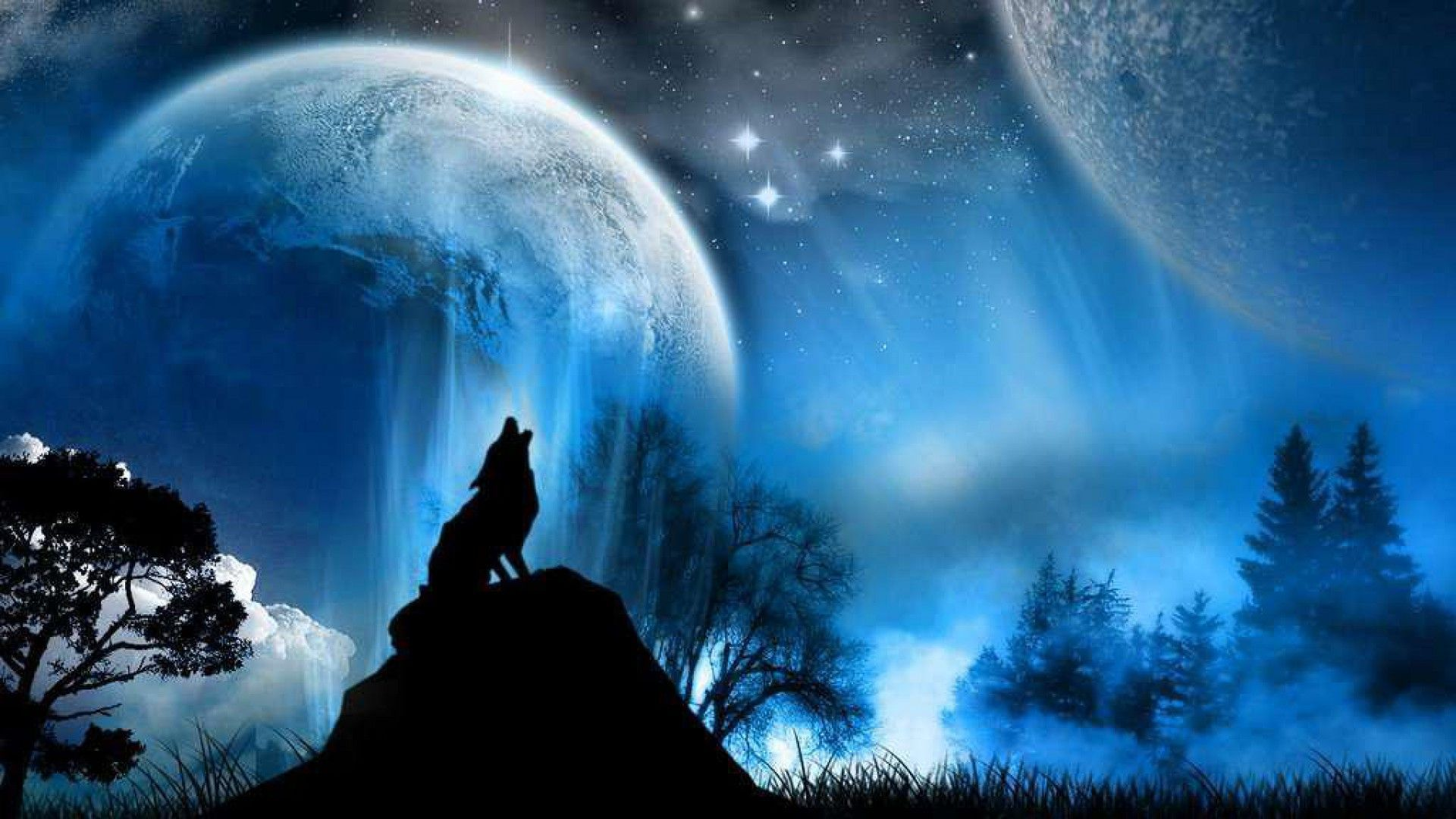 Wolfs Images