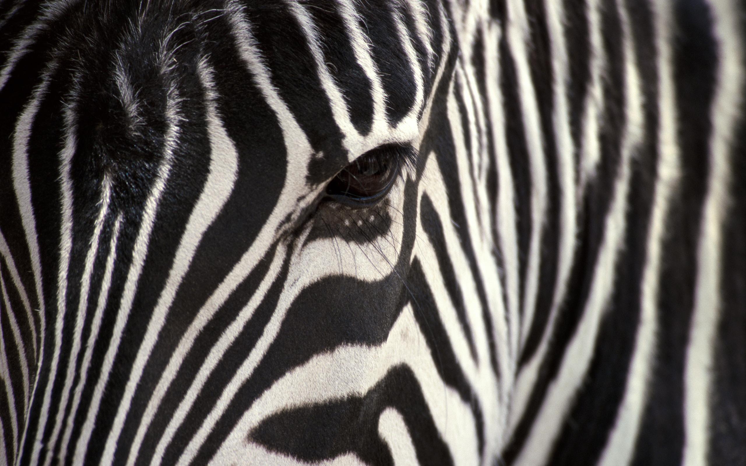 Zebra For Desktop