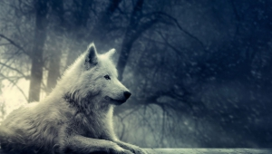 Cute Images Of Wolfs