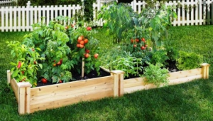 Inexpensive Raised Garden Beds