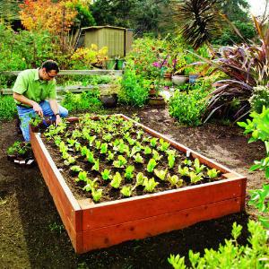 Raised Garden Beds Adelaide