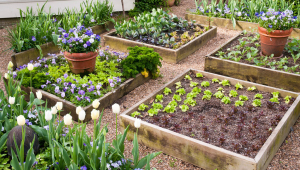 Raised Garden Beds Sydney