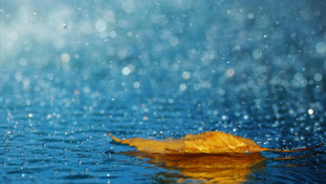 Rain HD Wallpaper