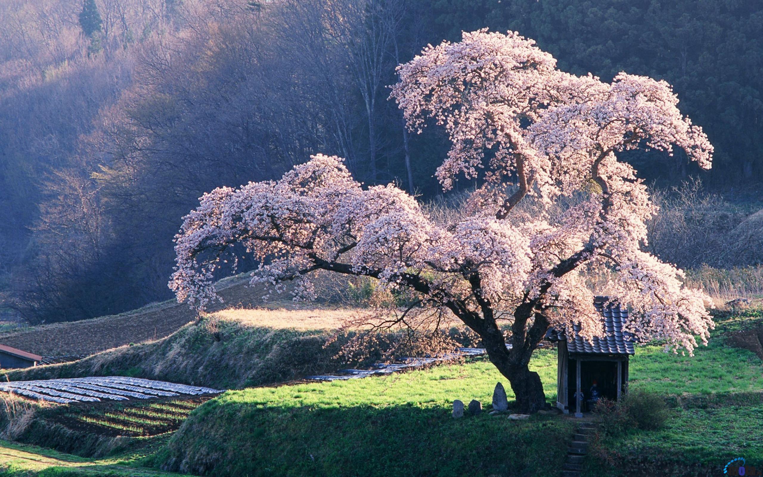 Sakura Screenshots