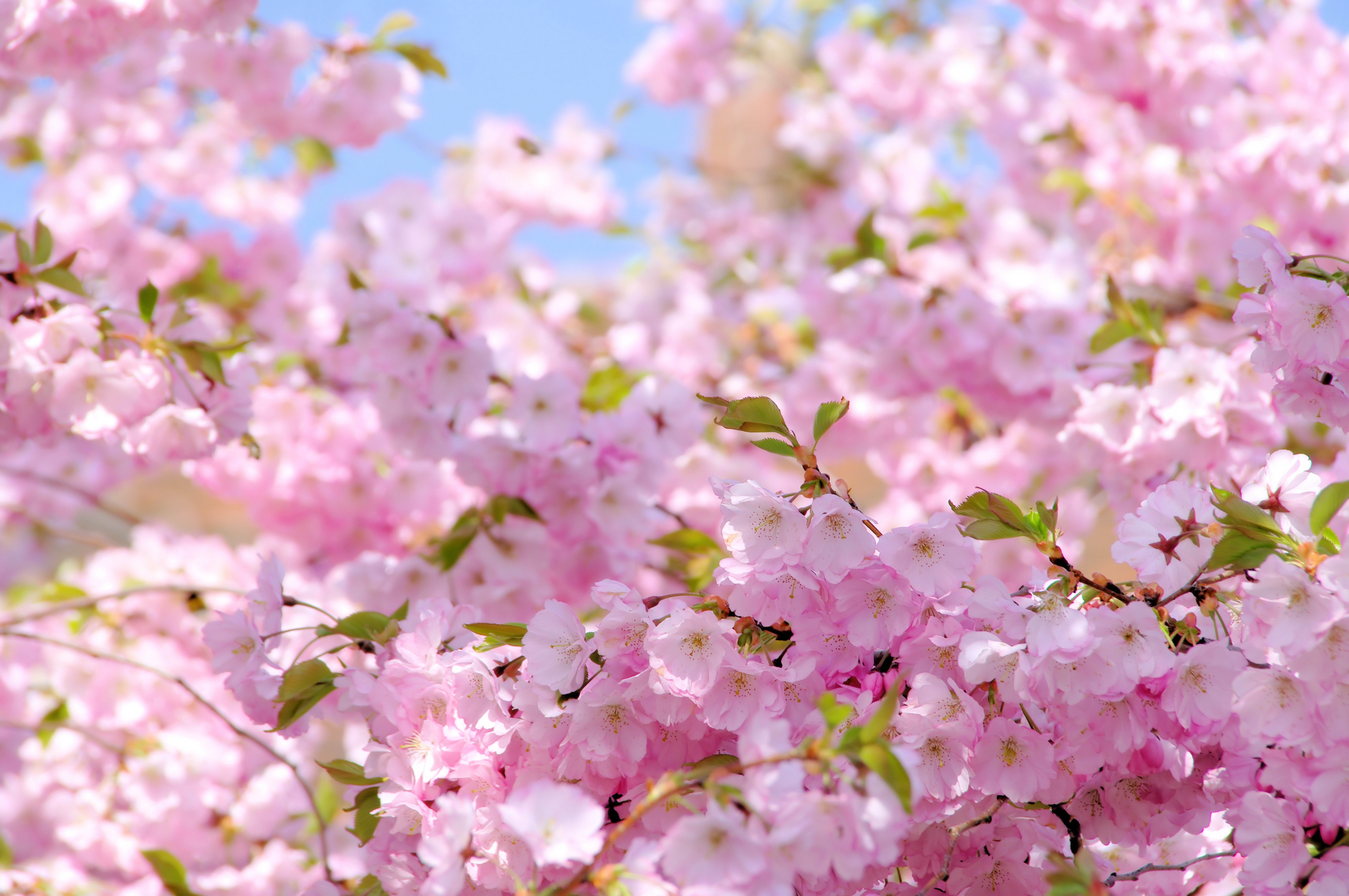 spring wallpaper for computer - HD2560×1600