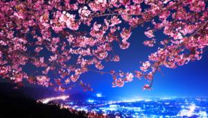 Sakura Pictures
