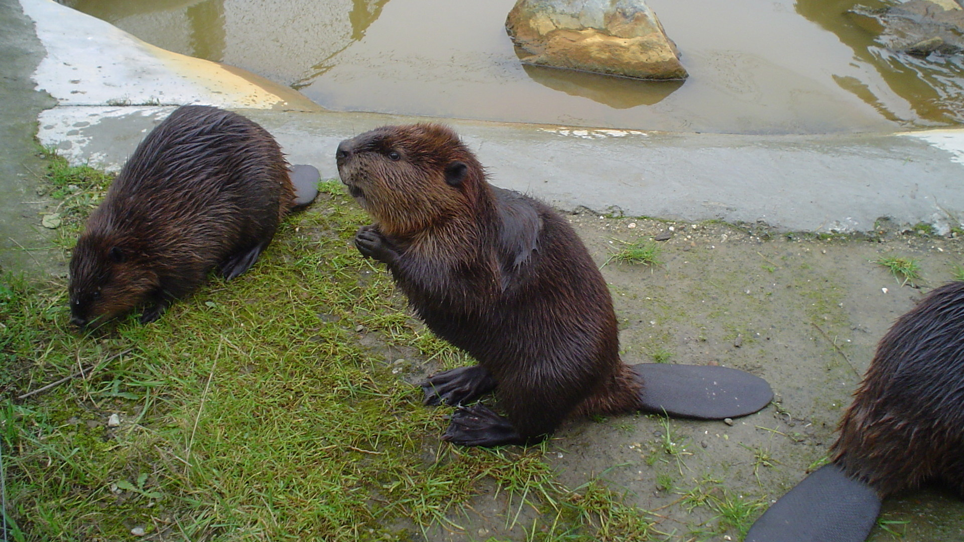 Beaver Desktop