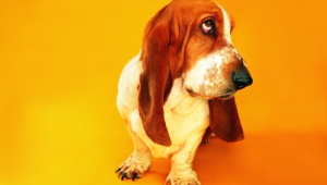 Funny Dogs Backgrounds