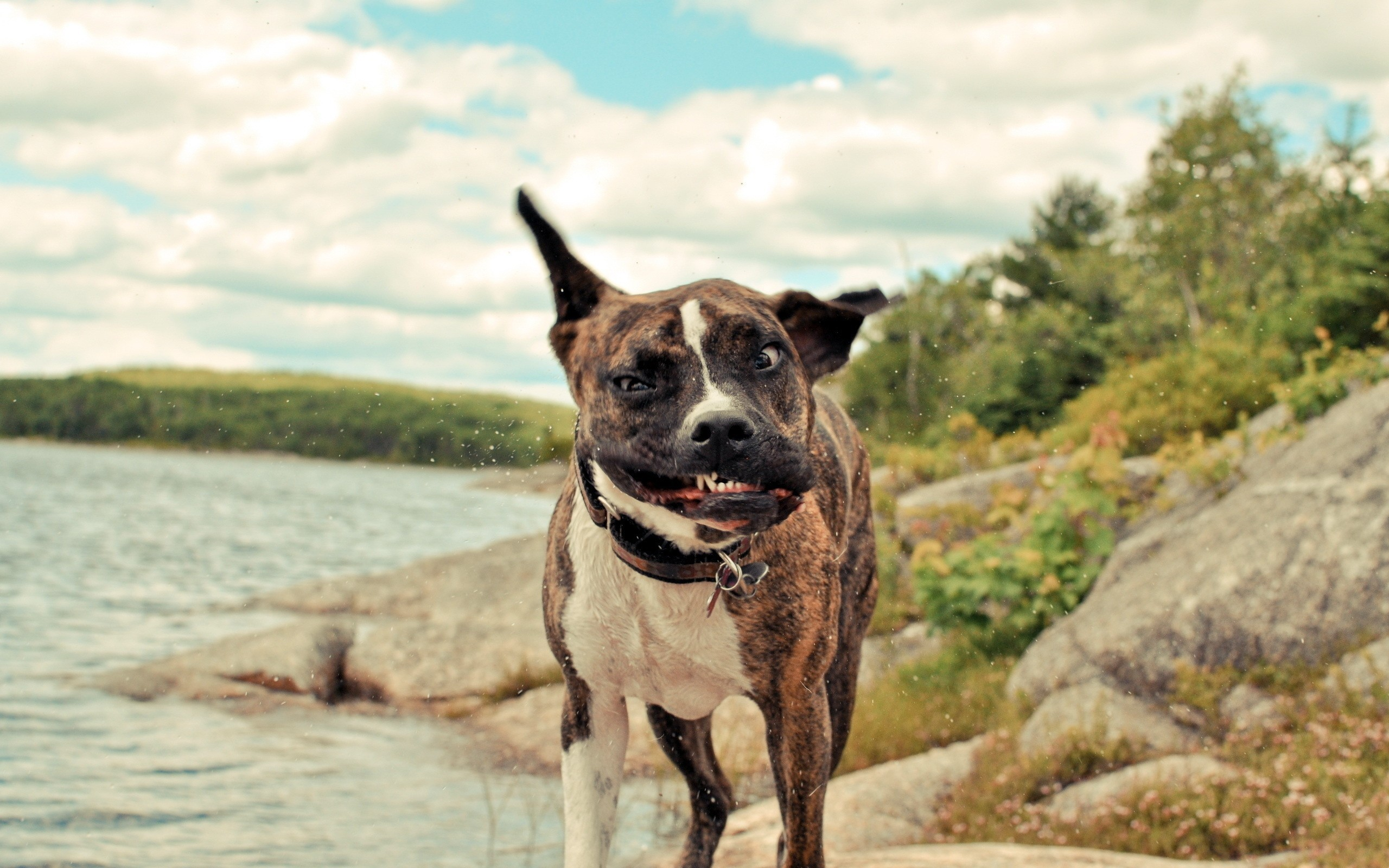 Funny Dogs Desktop Backgrounds