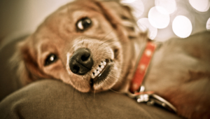 Funny Dogs Hd Background