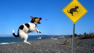 Funny Dogs Image Hd