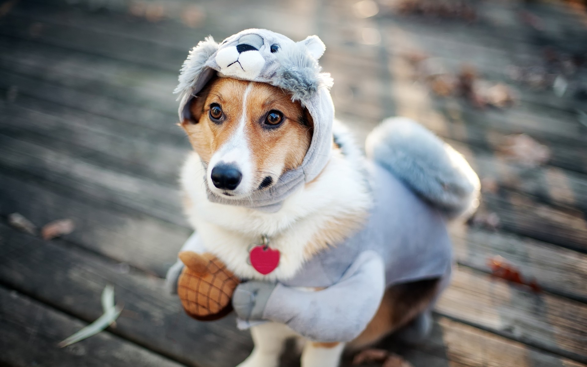 Funny Dogs Image