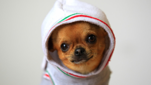 Funny Dogs Wallpaper Hd