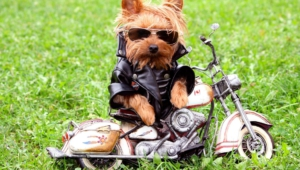 Funny Dogs Wallpapers