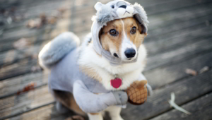 Dog Funny Outfit