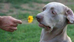 Funny Dog Dude