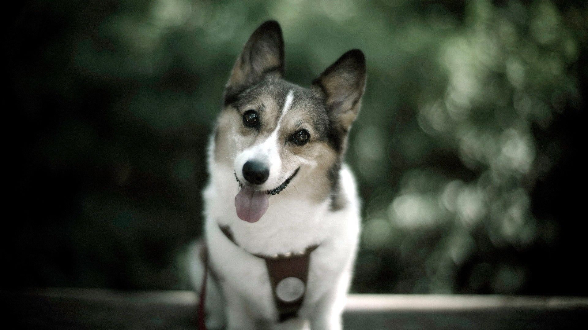 Pictures Of A Funny Dogs