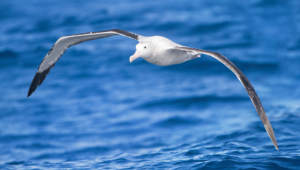 Albatross High Definition Wallpapers