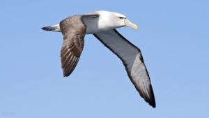 Albatross Images
