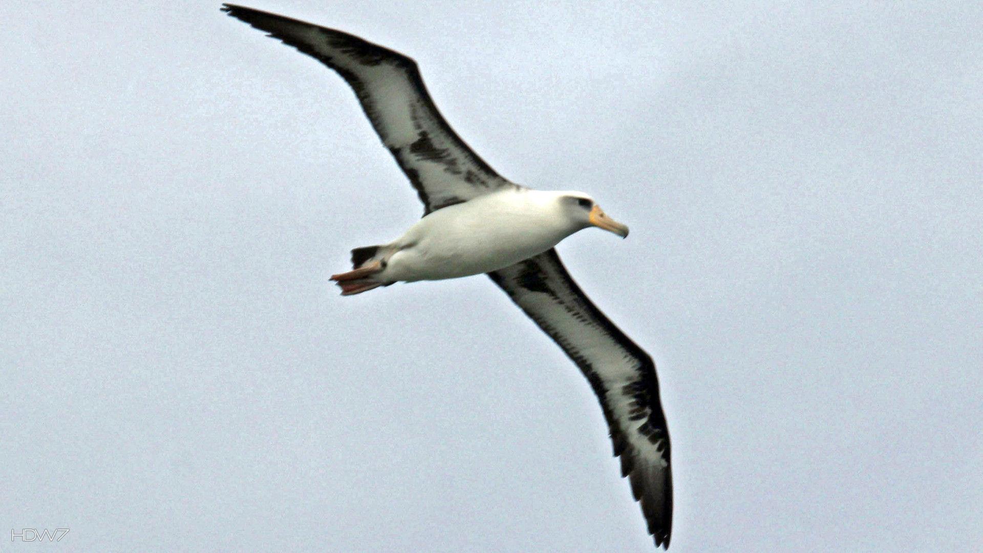 Albatross Pictures