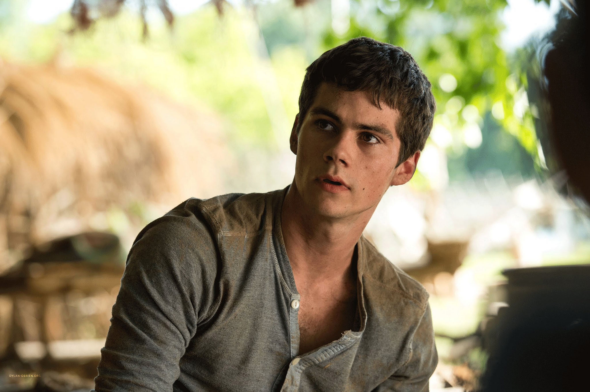 Dylan O'Brien High Quality Wallpapers