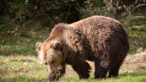 Bear High Definition Wallpapers