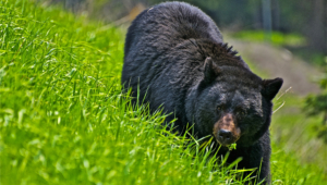 Bear Photos