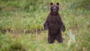 Bear Wallpapers Hq