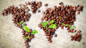 Coffee Beans 1566