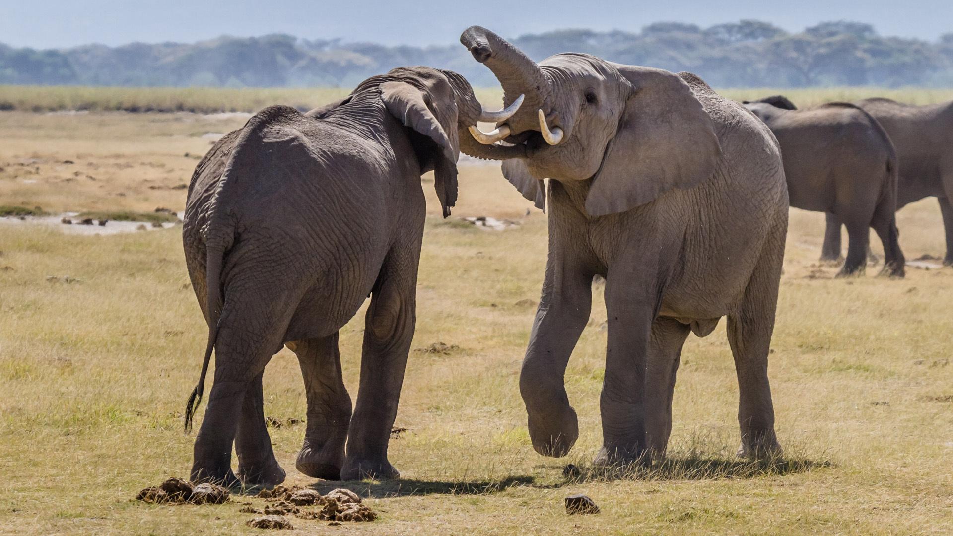Elephant 4k