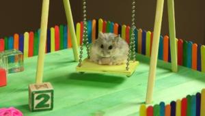 Hamster Desktop