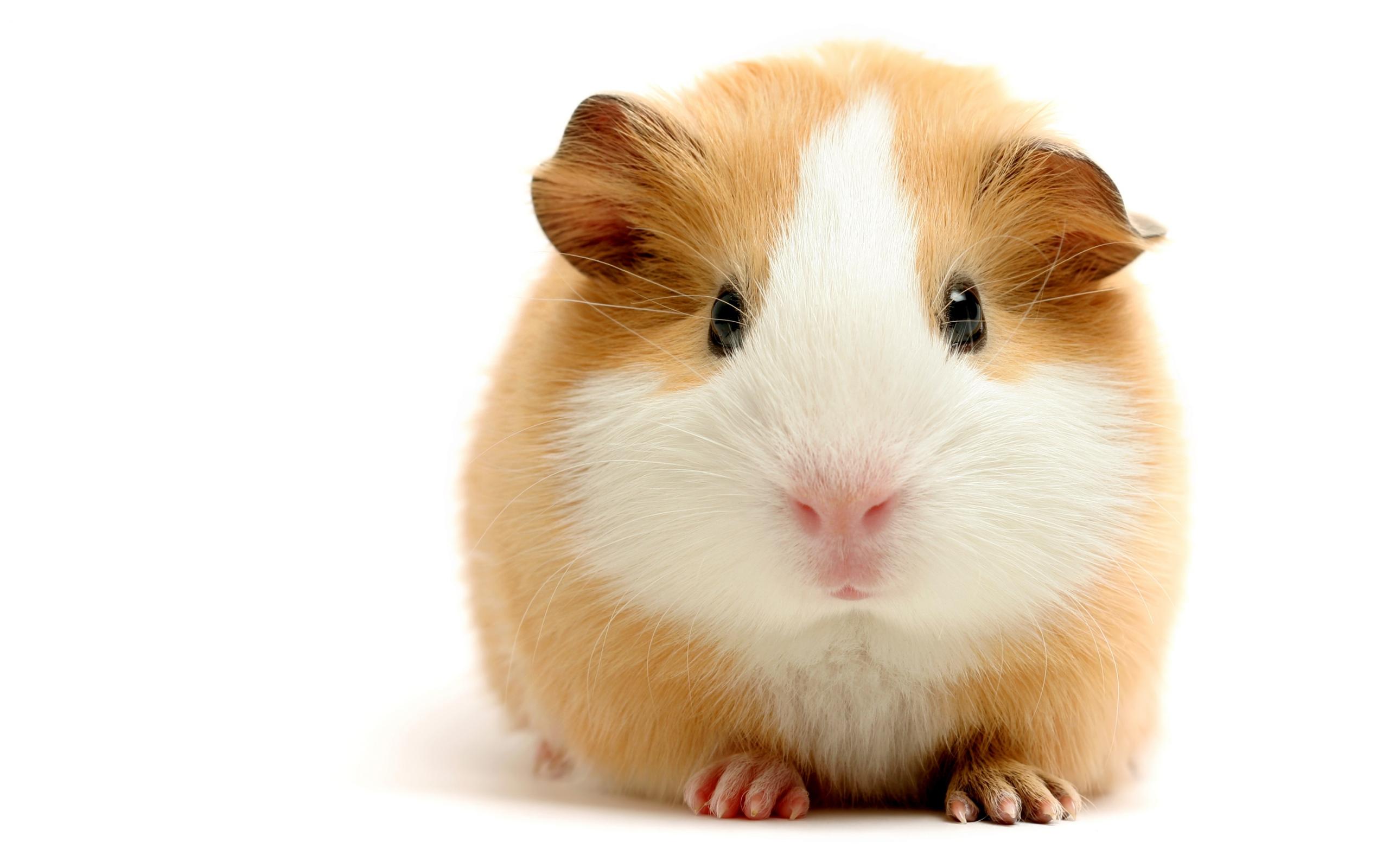 Hamster Widescreen