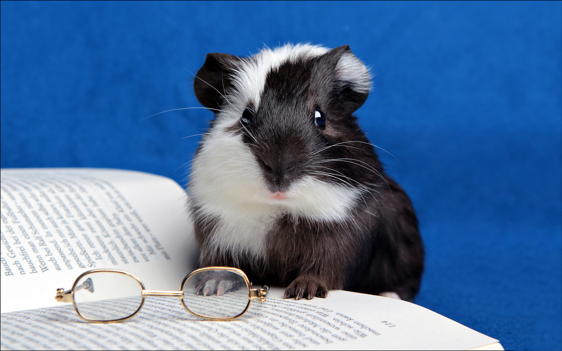 Pictures Of Hamster