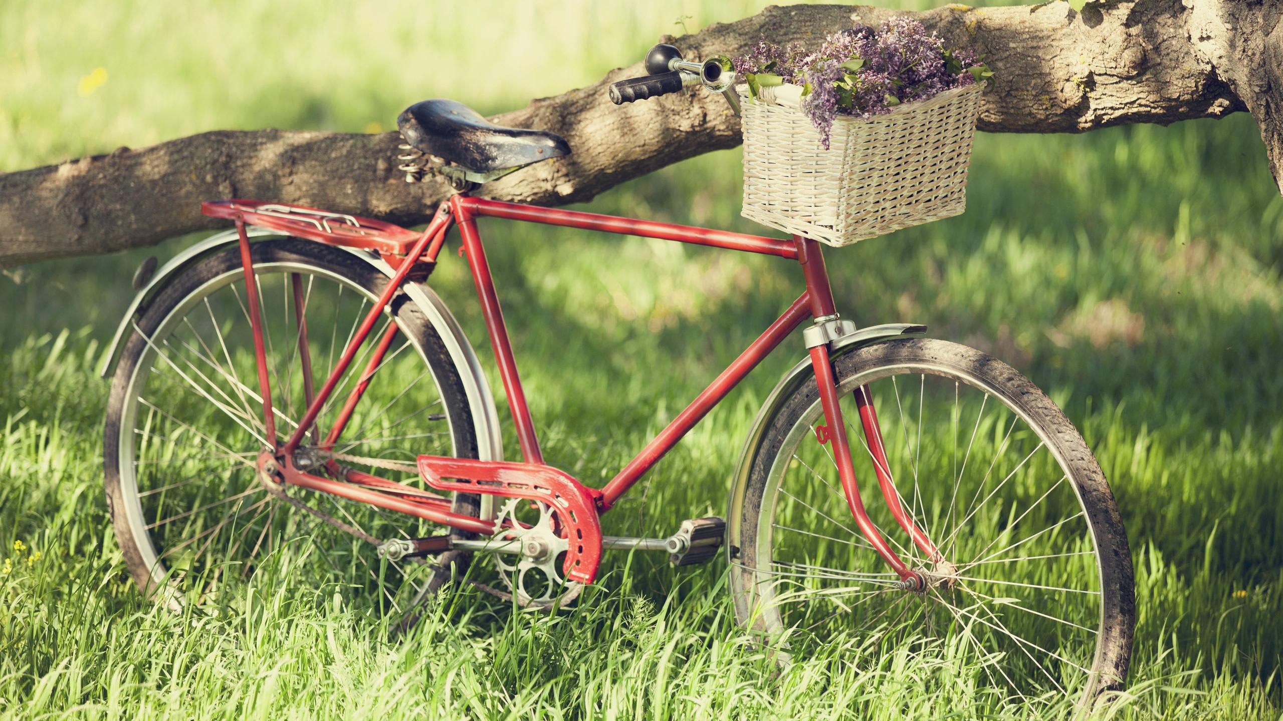 Bicycle Hd Desktop