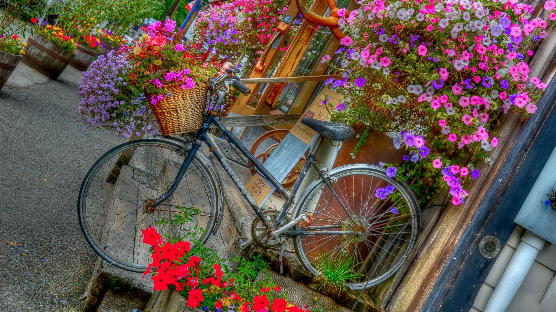 Bicycle For Desktop