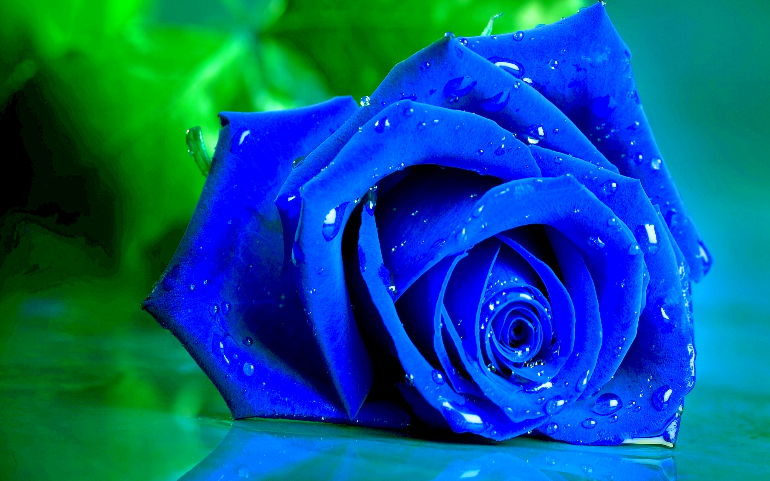 Blue Rose Hd Background