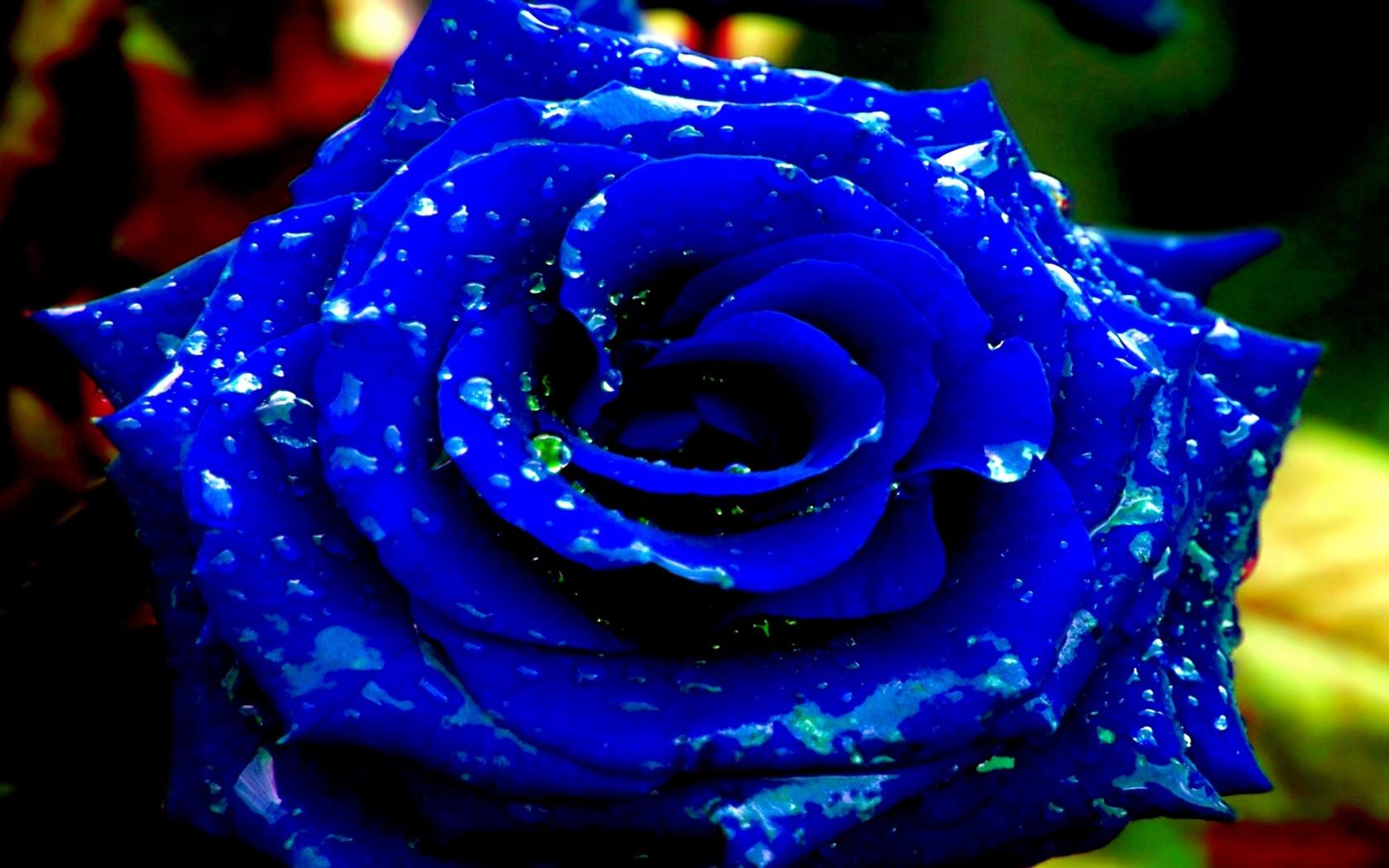 Blue Rose Hd Desktop